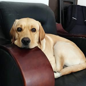 Pet pics: 'Ronny loves the sofa chair'