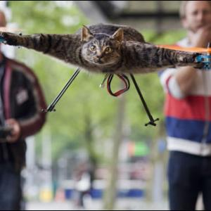 BIZZARE! A 'dead' cat-helicopter worth Rs 70 lakh