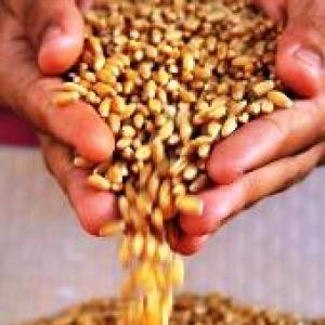 India wastes 21 mn tonnes of wheat every year