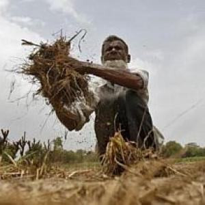 Few flaws that are plaguing India's agriculture