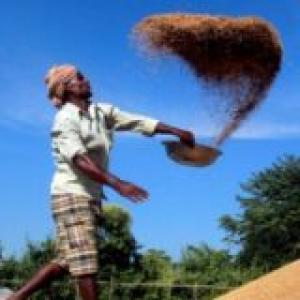 Poor monsoon? Govt may import pulses to beat shortage