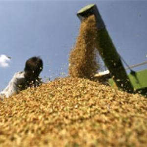Food law adrift as government trims grain purchases