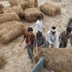 Can Indian agriculture adopt the 'Gujarat Model'?