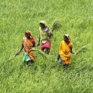 Farm growth in UPA era better than 4 years of NDA