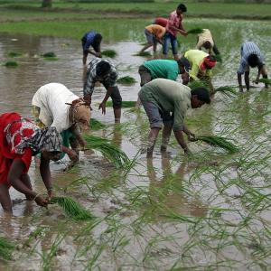 Kharif sowing rises to 1,062.93 lakh hectares so far