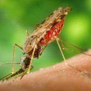 FAQ: All that you need to know about Malaria