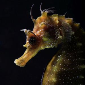 SNAPPED: Nature's beauty that lies 20,000 leagues below the sea