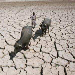 Dry as hell! 105 farmers commit suicide in a month in Marathwada