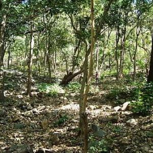 How two ministers made tribals lose control over forests