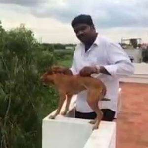 How Chennai identified the dog-thrower