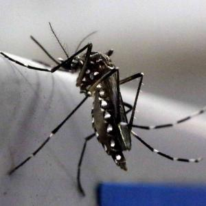 13 Indians test positive for Zika virus in Singapore