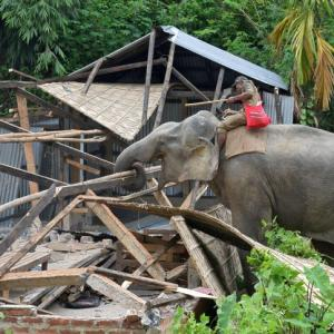 PHOTOS: When elephants turned bulldozers
