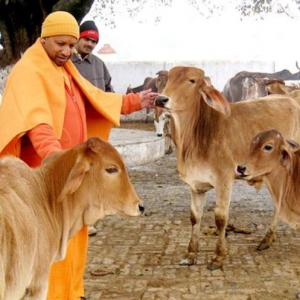 Gau raksha has replaced Sabka Vikas
