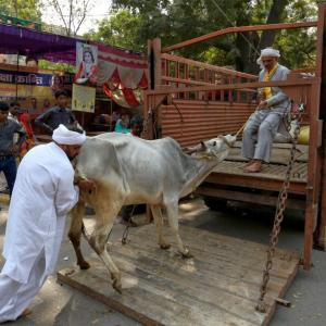 'Forcible vegetarianism will do no good': States may move court against ban