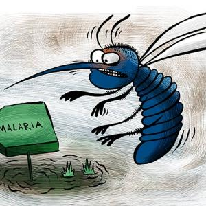 How can India rid itself of malaria?