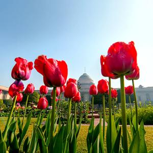 PHOTOS: 8 reasons why you should head to Rashtrapati Bhavan's Mughal Garden