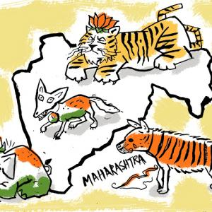 Maharashtra's Jungle Book