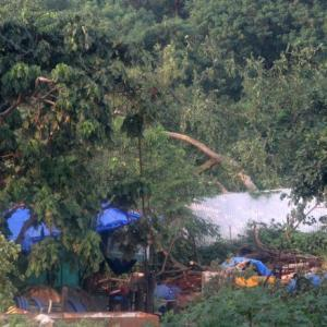 Activist seeks probe into axing of Aarey trees