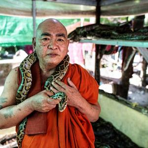 This monk offers shelter to snakes in monastery