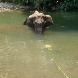 Not Indian culture: Govt on elephant's killing