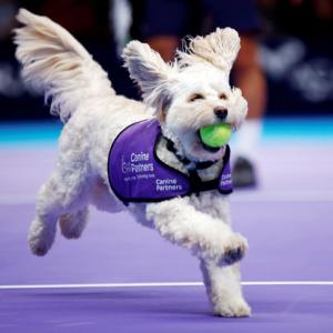 PIX: Fetch! Adorable canines play 'ball dogs' at London tennis event