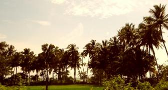 Coconut trees, loud music, jobs: Why GFP will back BJP
