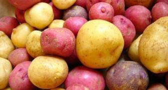 Potato talk: From health benefits to recipes!