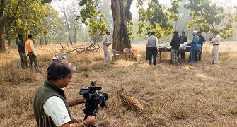 In pix: The tigers of Bandhavgarh