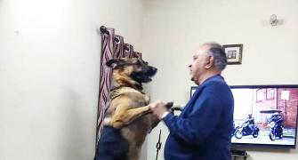 Pet pics: 'I love my German Shepherd'