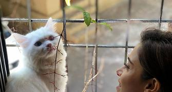 Have you met Nushrat Bharucha's cat?