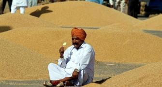Wheat procurement finally picks up