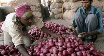 Why onion farmers are harvesting premature crop