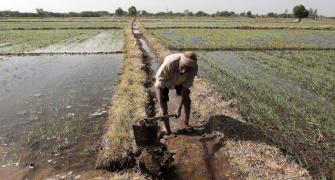 Budget: Farm experts want GST on agri-inputs to go