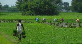 Agri loans not entitled for interest waiver, says govt