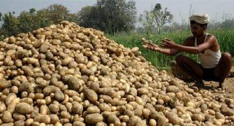 UP farmers feel the pinch as potato prices soar