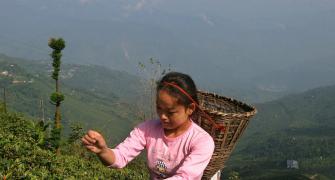 Is Darjeeling Tea Losing its Fizz?