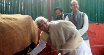Fodder for scam: Lalu and his cows