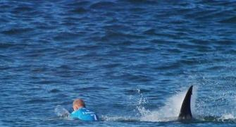 Jaw-dropping moment surfer survives shark attack