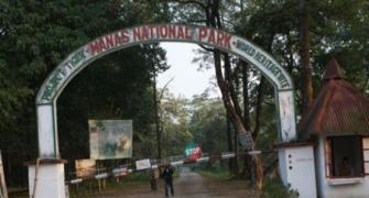 This Assam national park now a sanctuary for Bodo militants
