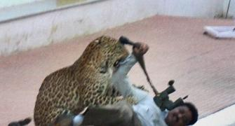 134 schools in Bengaluru declare holiday after leopard scare