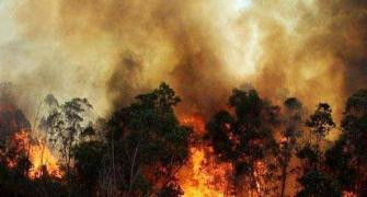 Did the timber mafia cause the forest fires?
