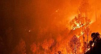 The devastating impact on glaciers, animals due to Uttarakhand fires