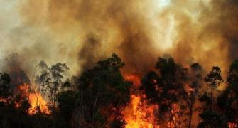 Time to make our forests fire-proof