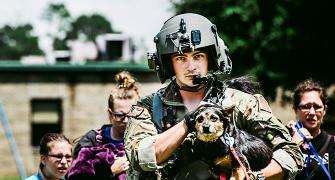 From cat to cow: Animal rescues during Hurricane Harvey