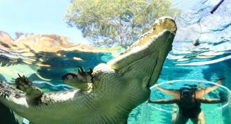 PHOTOS: Would you dare swim with these crocodiles?