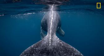 'A whale of a time': Nat Geo Travel Photographer winners