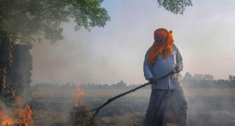 Why Punjab, Haryana farmers are defying ban on stubble burning