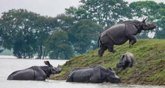 Assam flood: 90% of Kaziranga National Park submerged