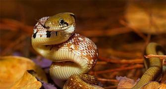 Wild Karnataka, India's first natural history film