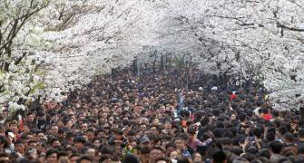 PHOTOS: Beautiful Cherry Blossoms around the world